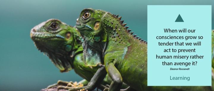 web-banner-teaching-copy-example.jpg